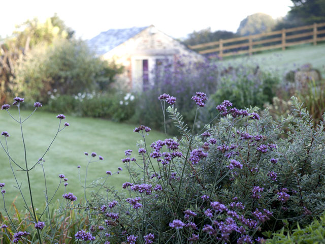 TOP TEN PLANTS FOR A COASTAL CORNISH GARDEN