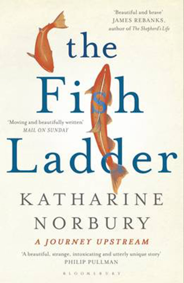katharinenorburythefishladder