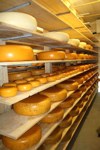 Cornish Gouda 2