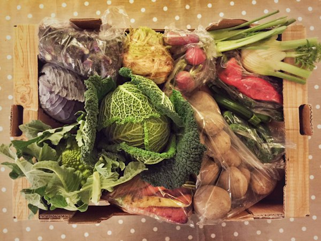 Padstow Kitchen Garden veg box